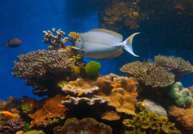 В Эйлате возрождают коралловые рифы