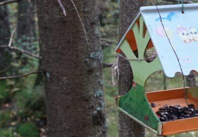 Кормушки-избушки в парке «Зверинец» в Гатчине